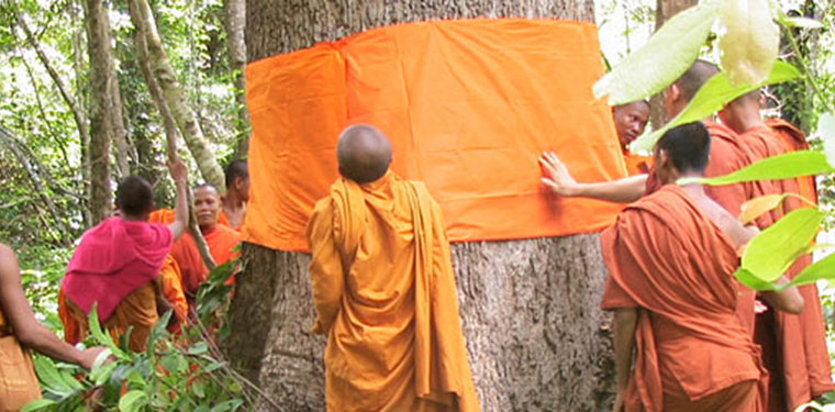 Tree protection ordination by Cambodian Monks